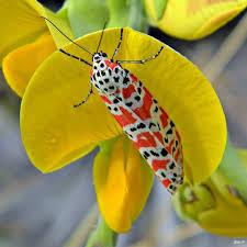 Cloth Bug